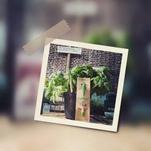 Ecopenna con semi di basilico