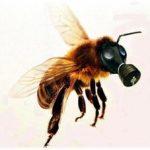 Ape con maschera anti gas - estinzione delle api